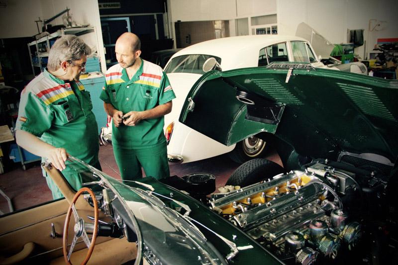 jaguar felix 01